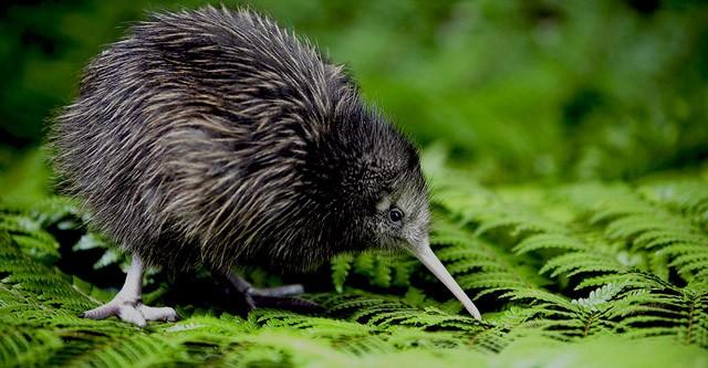 Qas Holidays Reis Nieuw Zeeland Rondreis Nieuw Zeeland